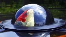 Inhabitat's Week in Green: fish domes and 3D-printed bridges