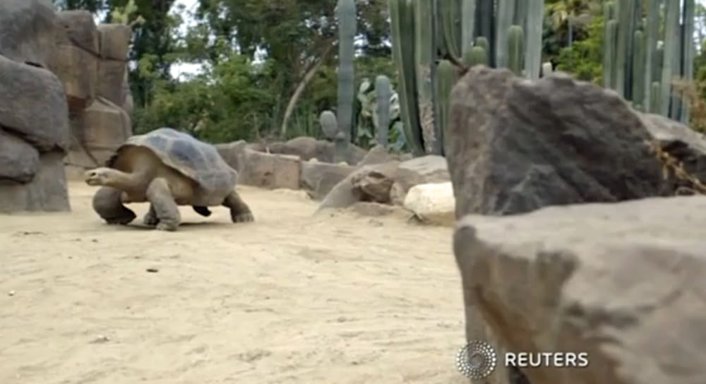 1000 Year Old Turtle