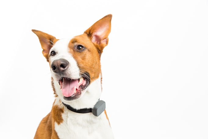Whistle's latest pet tracker is more accurate with better battery life