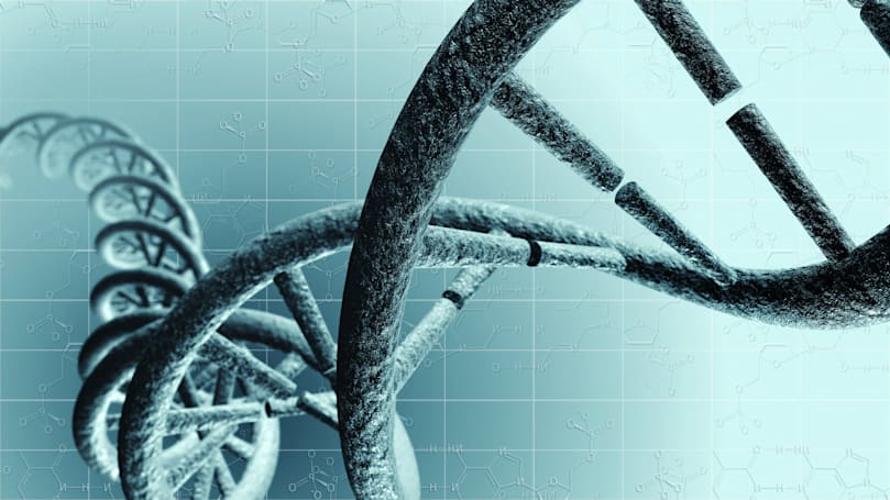 Scientists track gene parts controlling the embryo's early growth