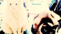 Entwarnung: Katzen machen doch nicht schizophren
