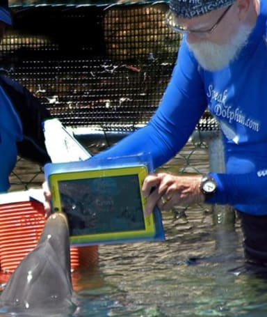 Dolphins enter cute-animals-using-iPads race, are in it to win it