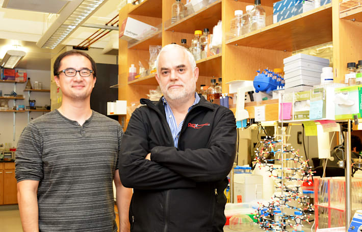 Scientists make a viable semi-synthetic organism