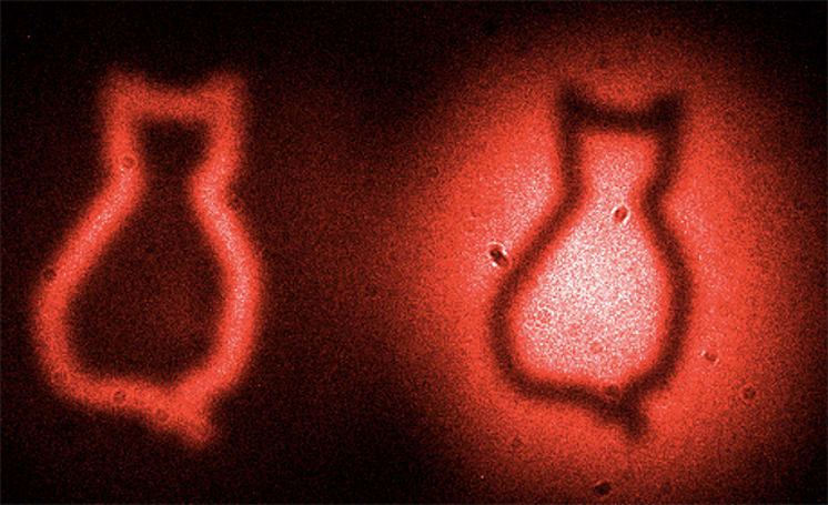Scientists catch Schrödinger's cat with quantum physics