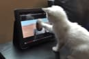 Star Wars kitty loves the iPad preview of 'The Force Awakens'