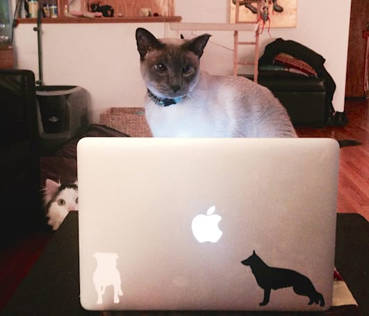 Caturday: The coding cats of Brett Terpstra