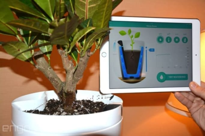 A connected plant pot meets a smart bulb at CES