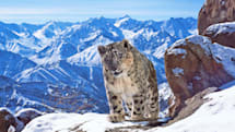 Nature documentary 'Planet Earth II' is coming to Snapchat