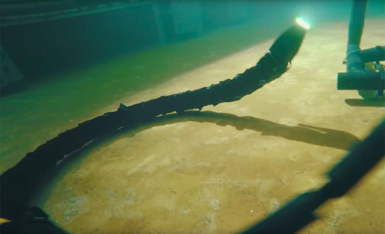 Watch a robotic snake swim eerily like the real thing