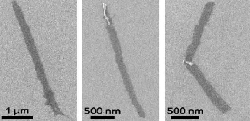 Graphene key to promising treatment for spinal cord injuries