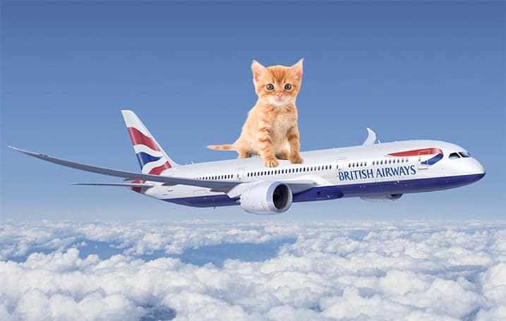 British Airways adding cat videos to its roster of in-flight entertainment