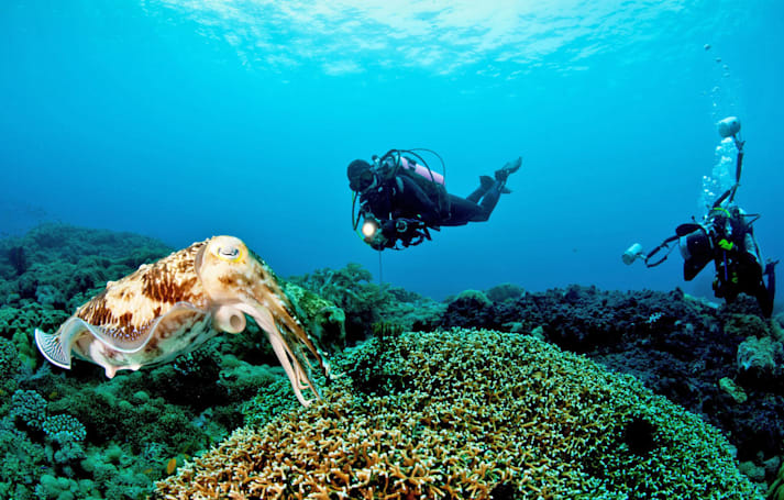 Amateur diving data could help climate change studies