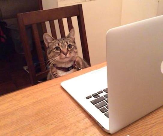 Caturday: I can haz TPS report?