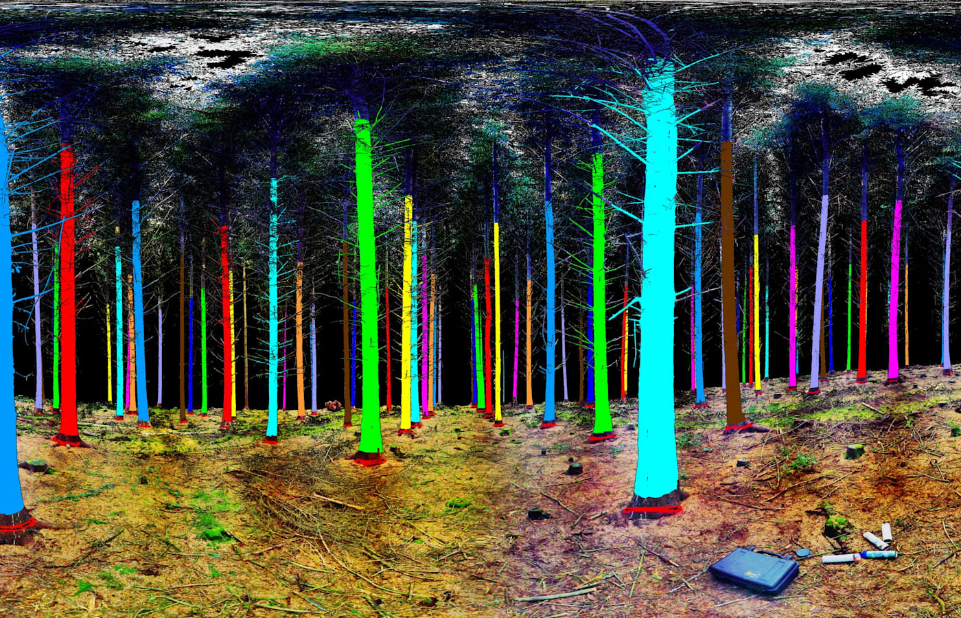 A false-color image of planted trees. State forest agencies and private plantations use lasers to measure tree health and prevent logging waste.