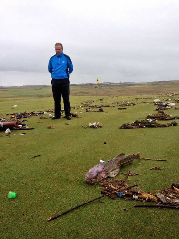 Pictured: Peter Evans stands on the third green with the cod that was discovered there. Re: A fully grown cod has been discovered at a golf course in south Wales. Peter Evans discovered the fish on the third green of the Royal Porthcawl Golf Club. The fish is believed to have been washed to the shore during the recent storms which has seen giant waves hitting the shores