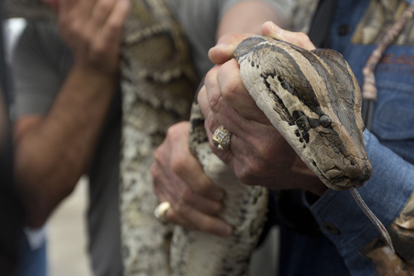 python strangles security guard near hotel indonesia