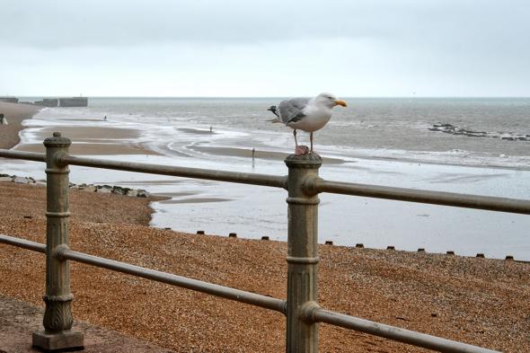 45-british-beaches-face-closure-sewage-contamination