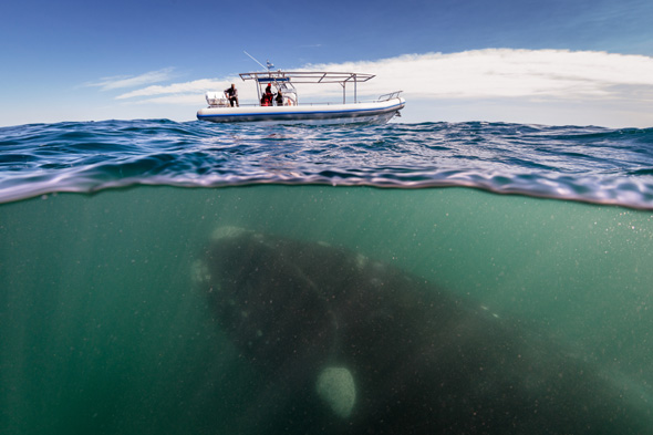 whale, tourist boat, argentina, pictures