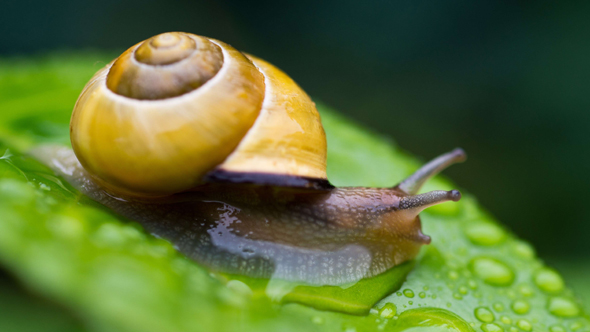 Sales of snail gel soar