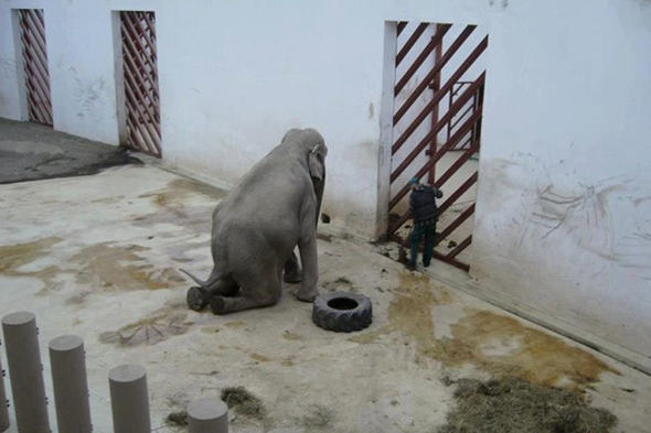 campaigners-trying-to-save-worlds-saddest-elephant-romania-zoo