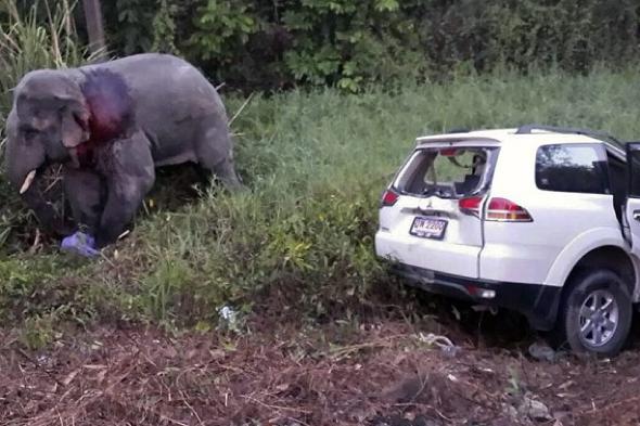 six-people-elephant-killed-crash-thailand