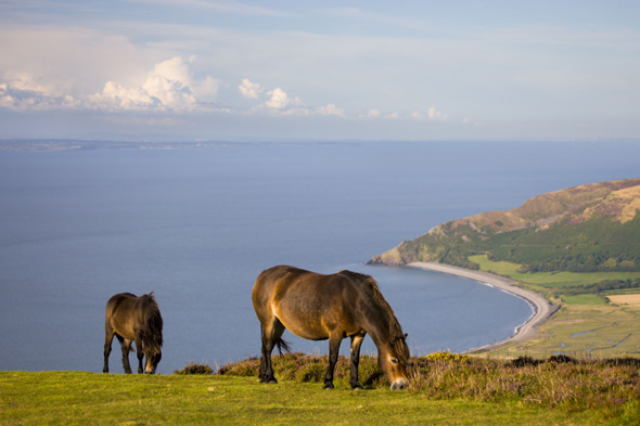 exmoor ponies should be killed for meat say experts