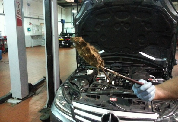 How To Get Dead Mouse Smell Out Of Car
