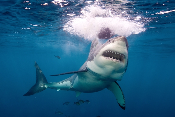 british-surfer-attacked-shark-new-zealand-punched