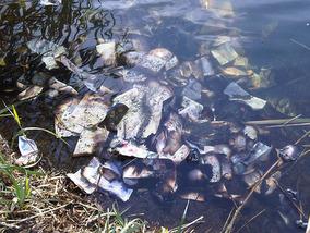 Money found in river