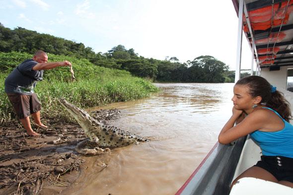 Tour guide hand feeds crocodile Jason Vargas Aguero
