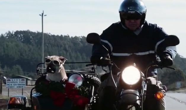 【ビデオ】サイドカーに乗る犬たちのドキュメンタリー映像