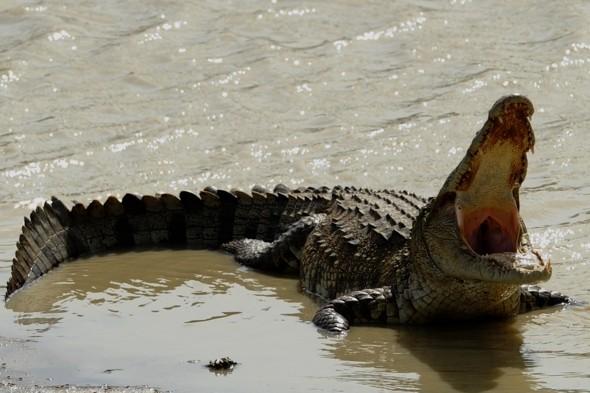 bristol-crocodile-sighting-motorist-nearly-crashed