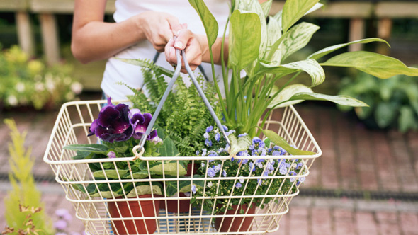 Homeowners spend £30k on gardening