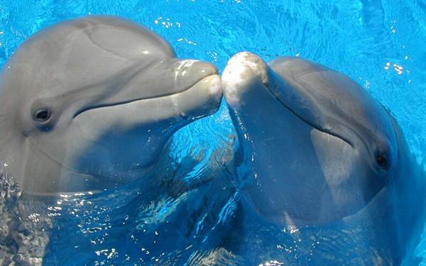 Miami Seaquarium dolphins