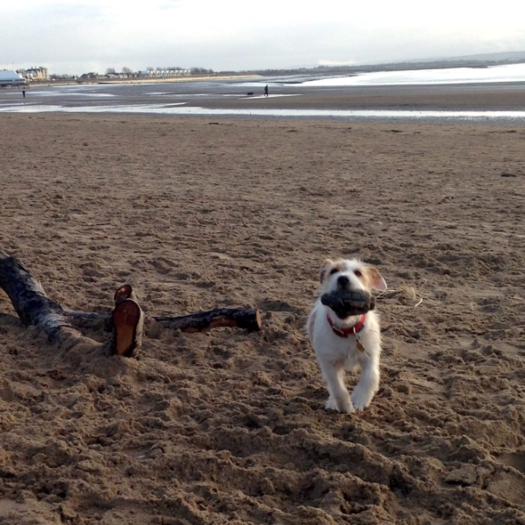 dog-beach-bomb