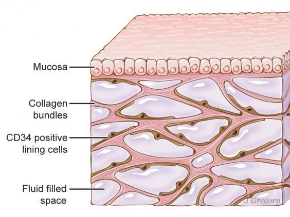 Scoperto interstizio: nuovo organo può svelare segreti dell'agopuntura