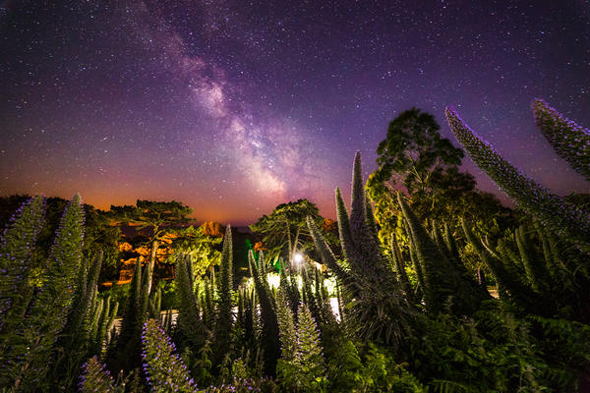 ISLE OF WHITE, GREAT BRITAIN - JUNE 23: A view of the Milky Way taken by Chad Powell on a DSLR camera on June 23, 2015. The shape of the echium pininana which grows all around Ventnor Botanic Garden and local gardens, can be seen here resembling the structure of our milky way galaxy as seen from earth in an bizarre way.  LIGHTS from the Milky Way dazzle above the Isle of White in these rarely seen British sky-scapes. Chad Powell captured images of spectacular light patterns above the familiar beach scenes of England?s largest island. The 23-year-old used a DSLR camera to enhance the Milky Way from the white strip visible to the naked eye into an explosion of colourful lights. The graphic designer from Ventnor, Isle of Wight, used the local architecture, coves and plant life of the island in the foreground of his photographs to create a contrast with the dramatic sky. Wheat fields, night daisies and a medieval lighthouse are some of the scenes Chad captures against the startling natural light displays.  PHOTOGRAPH BY Chad Powell / Barcroft Media  UK Office, London. T +44 845 370 2233 W www.barcroftmedia.com  USA Office, New York City. T +1 212 796 2458 W www.barcroftusa.com  Indian Office, Delhi. T +91 11 4053 2429 W www.barcroftindia.com