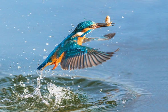 Photographer gets perfect pictures of kingfisher - after two years