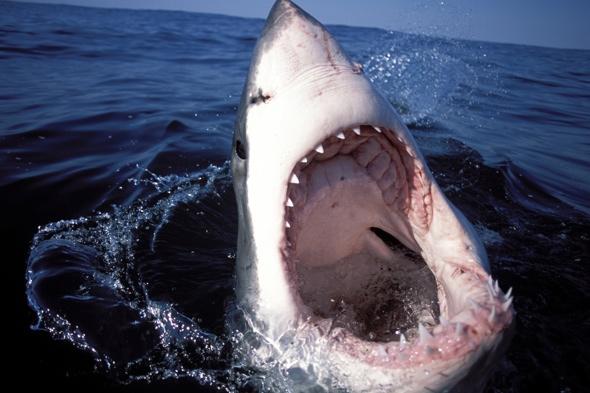 Great white shark sinks teeth into tiny fishing boat (video)