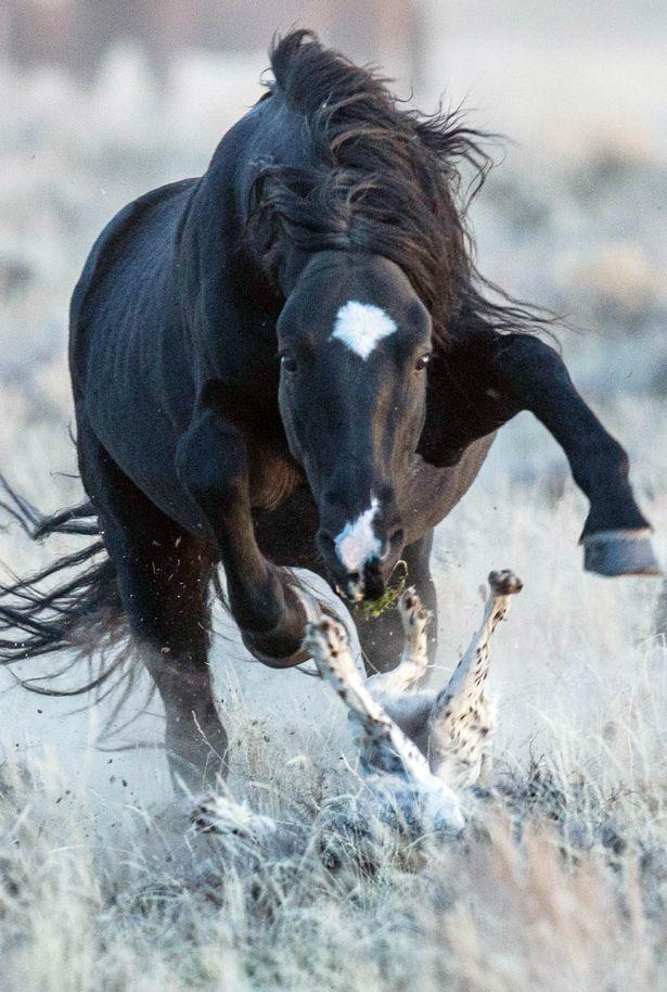 Stallion chases terrified dog