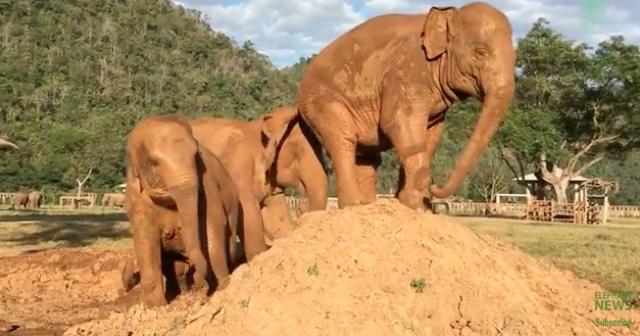 Elephant does HUGE 'revenge' fart on friend's head
