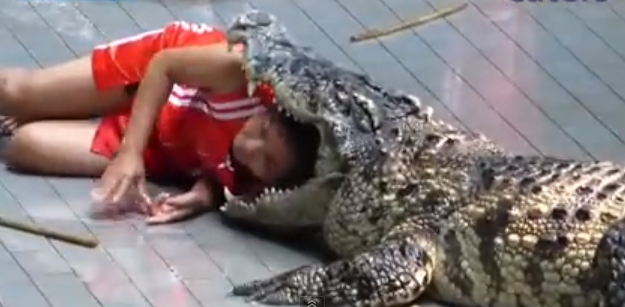 Zookeepers risk lives by putting heads in crocodiles