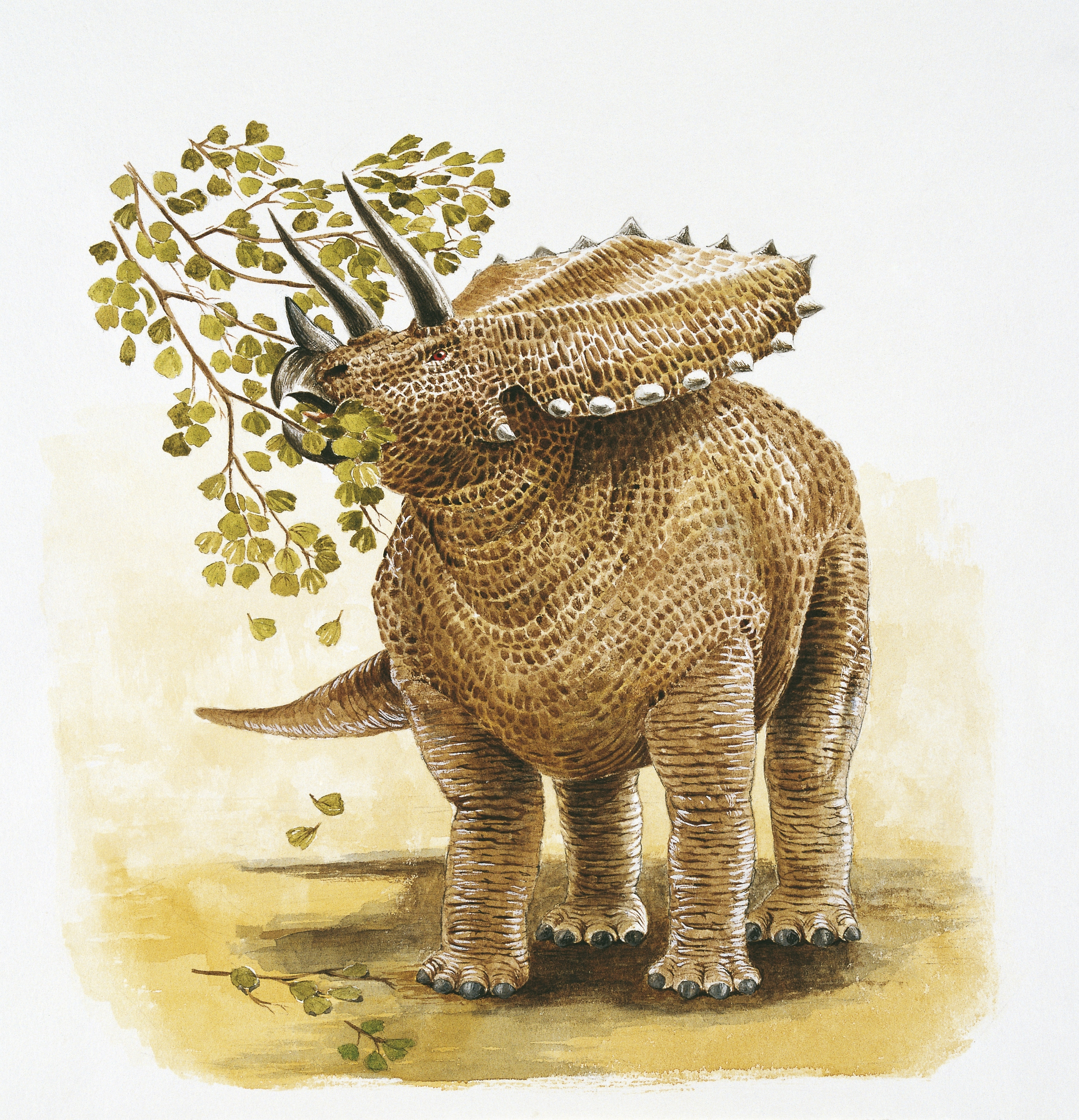 Illustration of Pentaceratops eating branch leaves