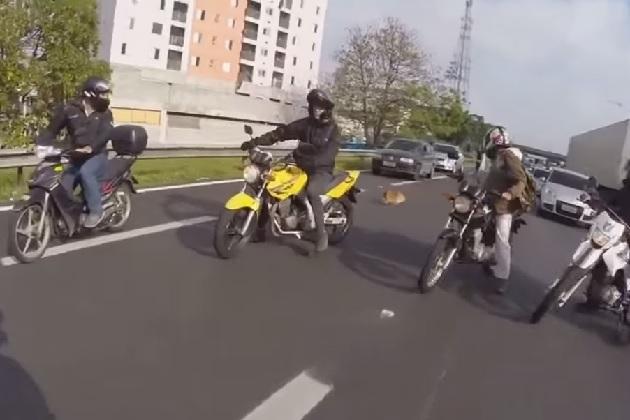 【ビデオ】本当は優しい? バイカー集団が高速道路で迷い犬を救出!