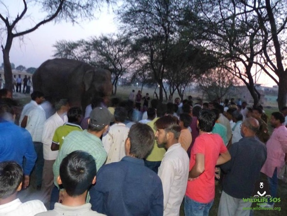 Angry crowd stops rescue team from saving abused performing elephant