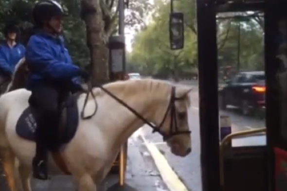 Horse tries to get on London bus