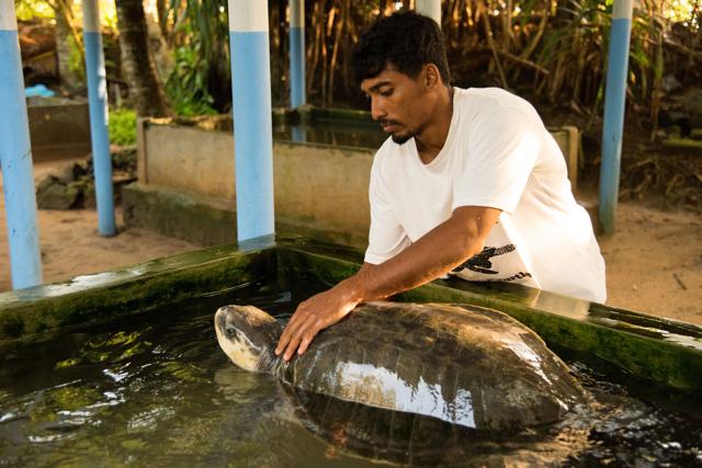 Tsunami survivor builds amazing turtle sanctuary