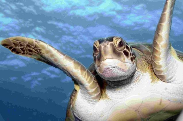 'Strike' 3 al proyecto de minería submarina Don Diego: un triunfo para la