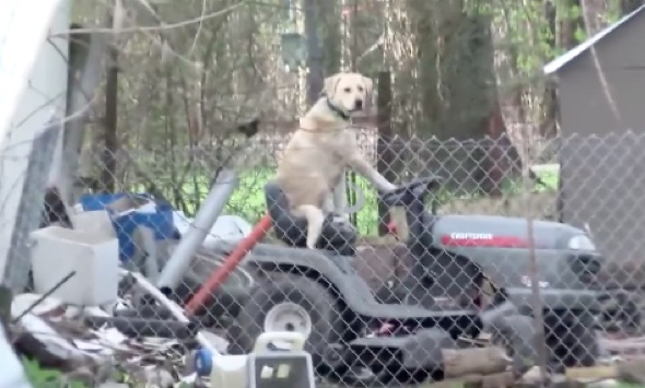 News team reporting on tornado spot dog riding a lawnmower
