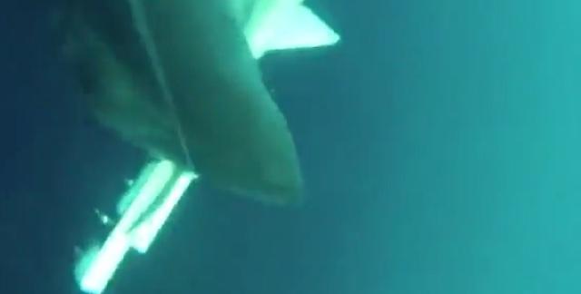 Great white shark attacks underwater drone (video)